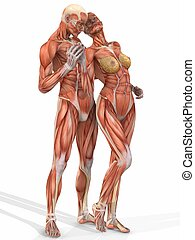 Female and Male Anatomic Body - Couple - 3D Computer Render