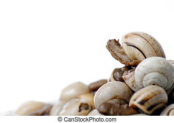 Bowl of snails in garlic, typical plate of Spain and France