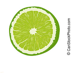 Lime - Fresh Lime fruit - vector illustration