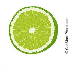 Lime.  - Fresh Lime fruit - vector illustration.