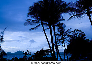 Blue hour - palmtree silhouette at nightfall