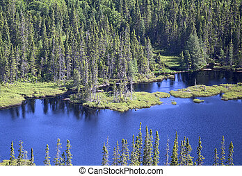 aerial forest - aerial wild forest and lake in northern...