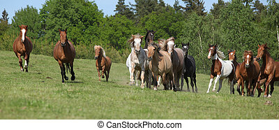 Very various barch of horses running on pasturage - Very...