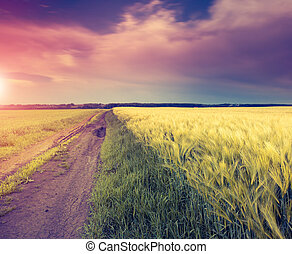 vintage color effect - Fantastic field at the dramatic...
