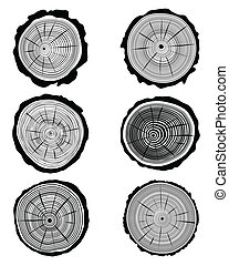 rings - Vector illustration of cross section of the trunk