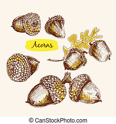 Acorns. Set of hand drawn graphic illustrations