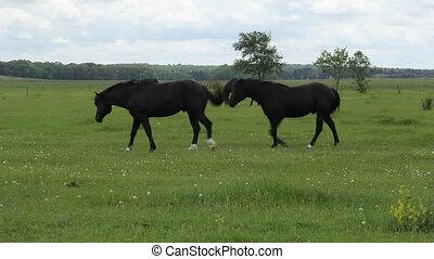 horses running on a green pasture