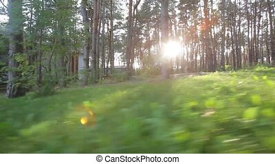 forest and sunny day morning - A sunny day in green forest...
