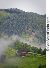 mountain mist in the mountains