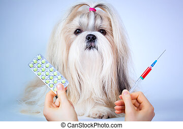 Shih tzu dog treatment. Focus on dog.