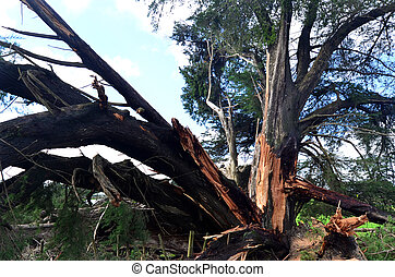 High Wind Storm Damage - PERIA, NZL - JULY 10 2014:Storm...