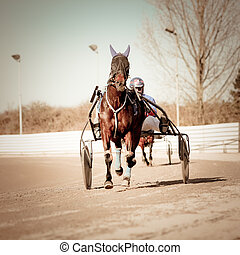 Harness Racing .horse  - Harness Racing .horse