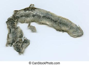 dead snake - snake