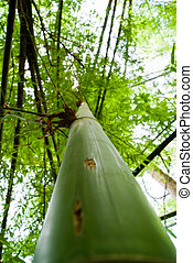 Bamboo leaves in the forest