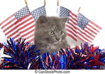 Fourth of July kitten - A gray kitten with Fourth of July...