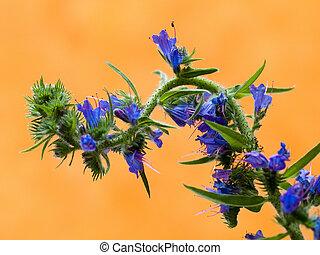 flower thistle 1 - purple on orange