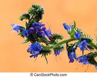 flower thistle 2 - purple on orange