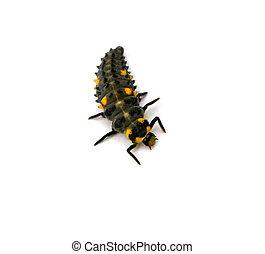 Ladybug Larvae - Ladybug larvae isolated on a white...