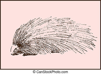 porcupine - vector sketch of a porcupine made by hand
