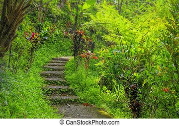 Balinese jungle - Green tropical jungle pathway on Bali,...