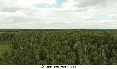 Fly Over The Forest Aerial Shot