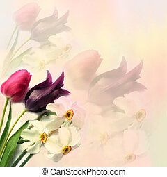 Greeting floral card with tulips and narcissus on hazy...