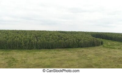 Forest on the height of bird flight. Aerial footage.