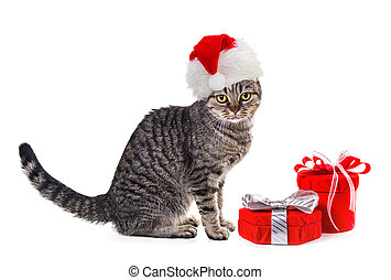 Cat in Santa Claus xmas red hat with gifts. Isolate on white...