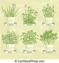 herbs in pot, garlic, parsley, dill, sage and basil, herbal...
