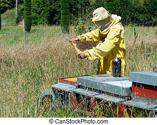 Bee-keeper at work - checking hives. Smoker to hand. -...