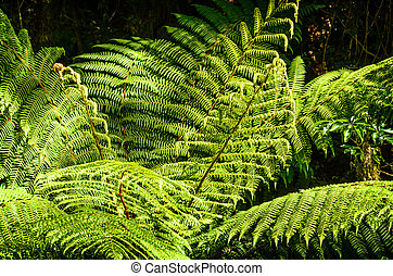 fresh green fern leaves. close-up - beautiful fresh green...