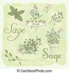 Sage, salvia, clary sage, herb, plant background