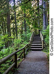 Wooden staircase on a pedestrian trail in the Capilano River...