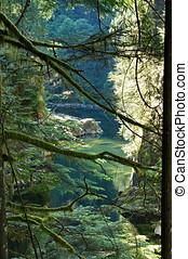 Capilano River Park - Capilano River view through branches...