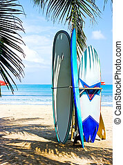 Surf boards on the beach - Several surf boards standing on...