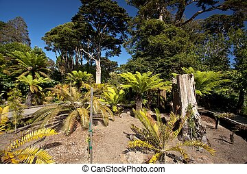 SF Botanical Garden - San Francisco Botanical Garden...