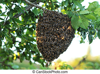 Bees - Big swarm bee on tree