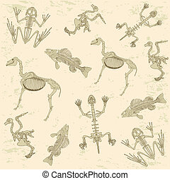animals anatomy, skeleton of horse, pigeon, frog and turtle,...