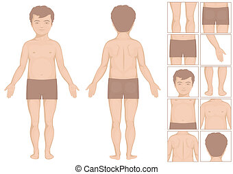 baby boy body parts, vector cartoon illustration for kids