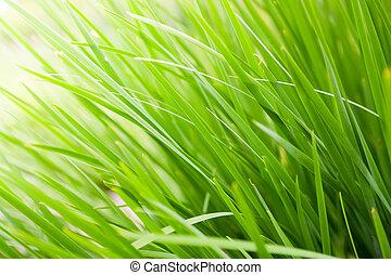 Green Grass background - fresh green grass close up nature...