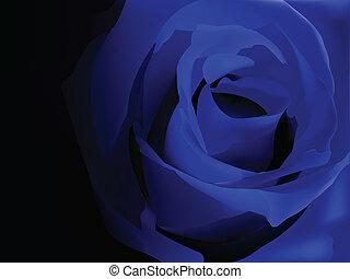 Blue rose on black