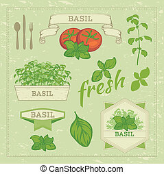 basil - vector isolated herbs illustration, basil leaves and...