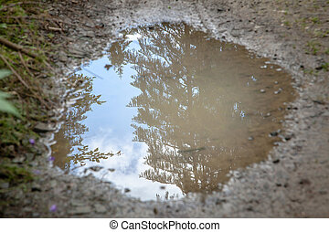 mud puddle reflecting sky and evergreens in Carpathians,...