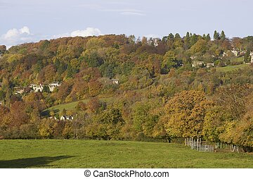 Autumn in the Cotswolds - Autumn leaves on trees in the...