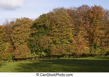 Autumn Color in the Cotswolds - Autumn leaves on trees in...
