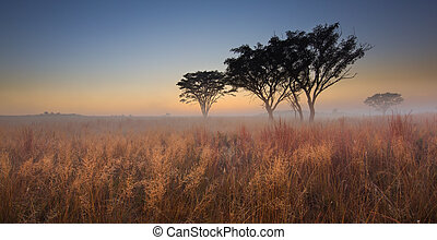 Cold cloudless morning sunrise with trees, brown grass and fog