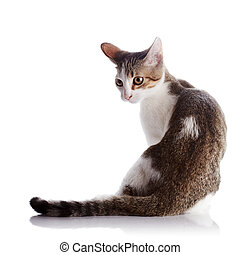 The kitten sits on a white background. - Multi-colored small...