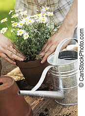 Potting - Hands putting white flowers in a pot
