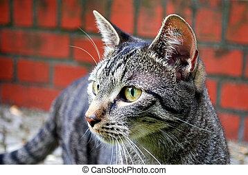 tabby cat - stray tabby cat in front of brick wall