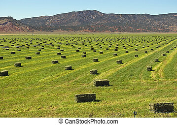 Hay - Bright green hay field with bales ready for stacking